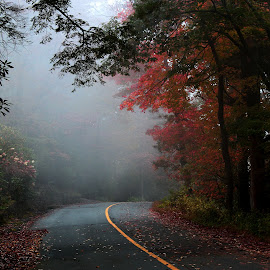 fall is just round the corner by Sunil Pawar - Landscapes Forests ( smokey, mountains, grand, autumn, foliage, colors, fall )