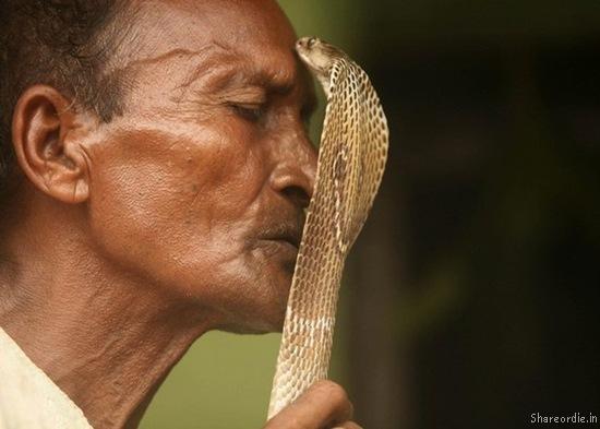 Tempting a cobra