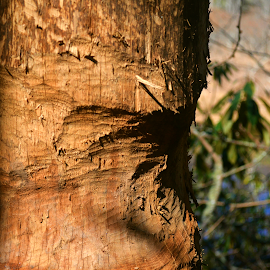 Clawed Tree by Jarrod Elliott - Nature Up Close Trees & Bushes (  )