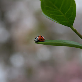 ladybird by Do Nny - Nature Up Close Gardens & Produce