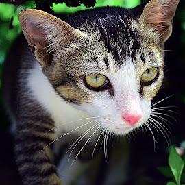 Kucing Ipang5 by AbngFaisal Ami - Animals - Cats Portraits