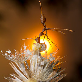 Ant-Gymnastic Under Sunshine by Carrot Lim - Animals Insects & Spiders