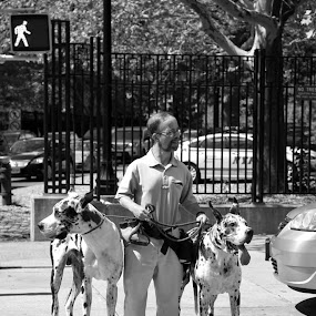 Walking The Dogs by VAM Photography - City,  Street & Park  Street Scenes ( dogs, places, nyc, man, street photography,  )