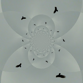The Turkey Buzzard by Yvonne Collins - Digital Art Abstract ( edited, abstract, digital art, turkey buzzard, photography )