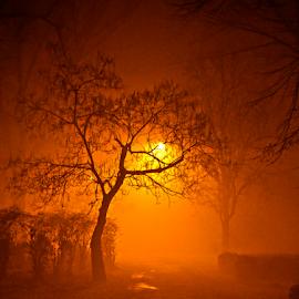 Park Čair at night by Mario Denić - City,  Street & Park  Night ( red, tree, park, fog, night,  )