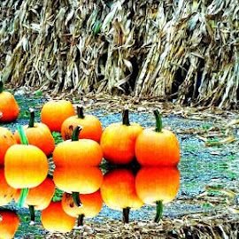 Pumpkin picking with friends from DC.... by Maria Henze - Nature Up Close Gardens & Produce
