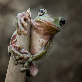 enjoy by Alonk's Roby - Animals Amphibians