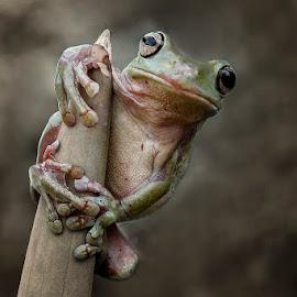 enjoy by Alonk's Roby - Animals Amphibians