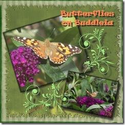 butterflies on buddleia Medium Web view