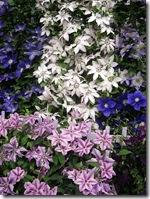 ingliston flowers5