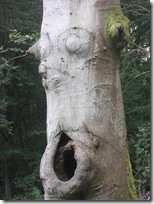 haining tree face
