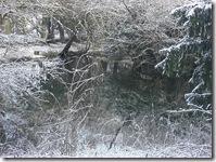 snowy pond at Traquair