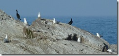ptk seabirds