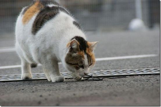 fat_cats_42