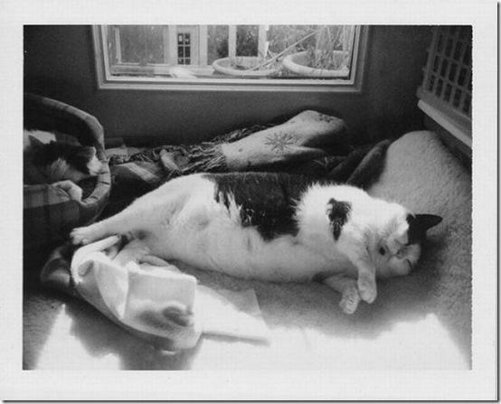 fat_cats_32