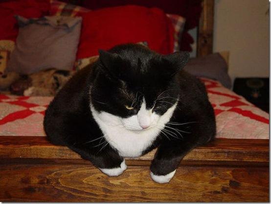 fat_cats_05