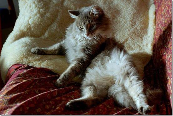 fat_cats_51
