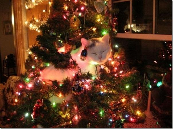 cosasdivertidas.net  gatos (1)
