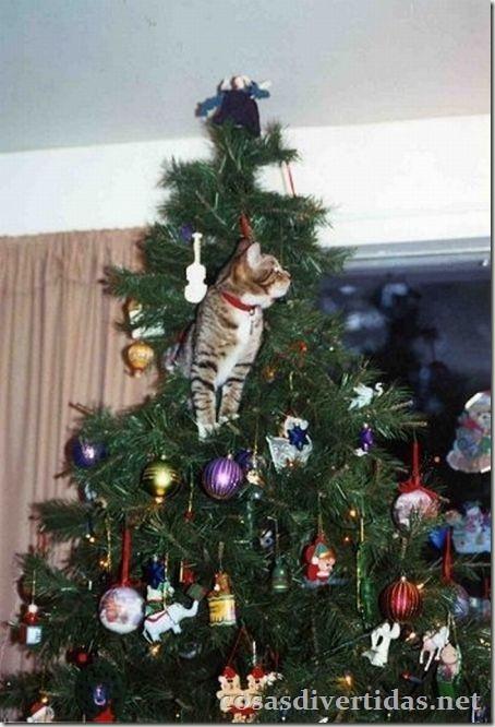 cosasdivertidas.net  gatos (5)