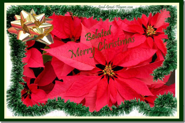 belated-poinsettia-ecard-lg