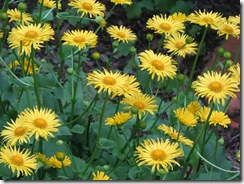WK 3 Leopards Bane