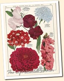 Salzer flowers 1