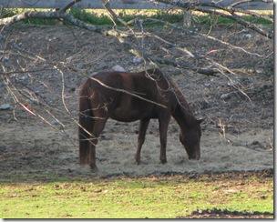 Wrentham horse 2