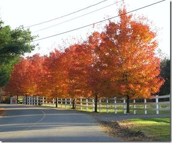 Wrentham trees