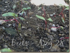 0908 Beets