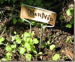 0908 Turnip