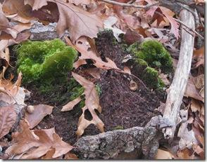 11 07 Moss