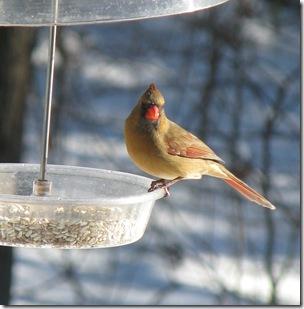 12 26 Cardinal