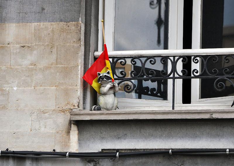 Енот с бельгийским флагом в Брюсселе