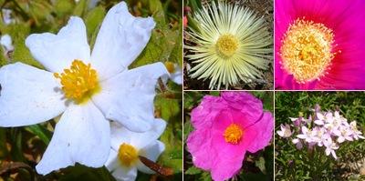 Ver flores espichel