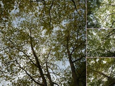 Ver folhas no céu