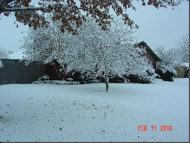 snow in feb 010