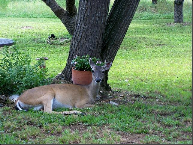 5-10 doe by tree