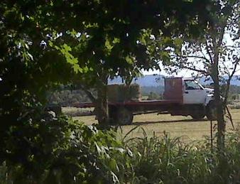 Wood hay 3 2009