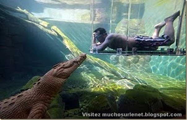 Nager avec les crocodiles_Parc Crocosaurus Crique-1