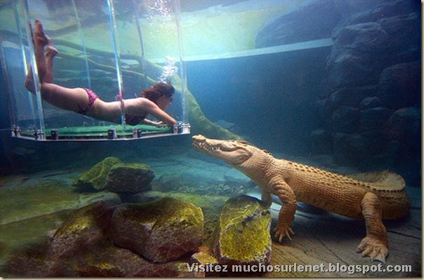 Nager avec les crocodiles_Parc Crocosaurus Crique-4