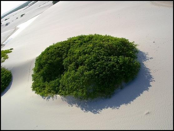 Le désert blanc brésilien (9)