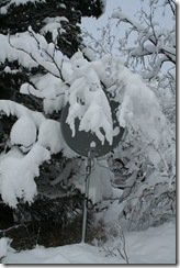snow10 004