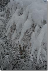 snow10 009