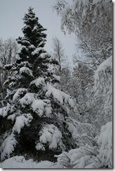 snow10 010