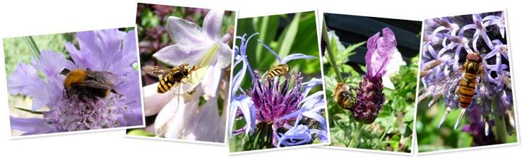 insecten in de tuin weergegeven