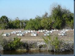 "Bees near La Belle - ""The Sweetest Town in America"""