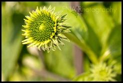 Flowersbloom-4