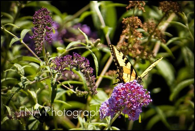 flower-butterfly-2