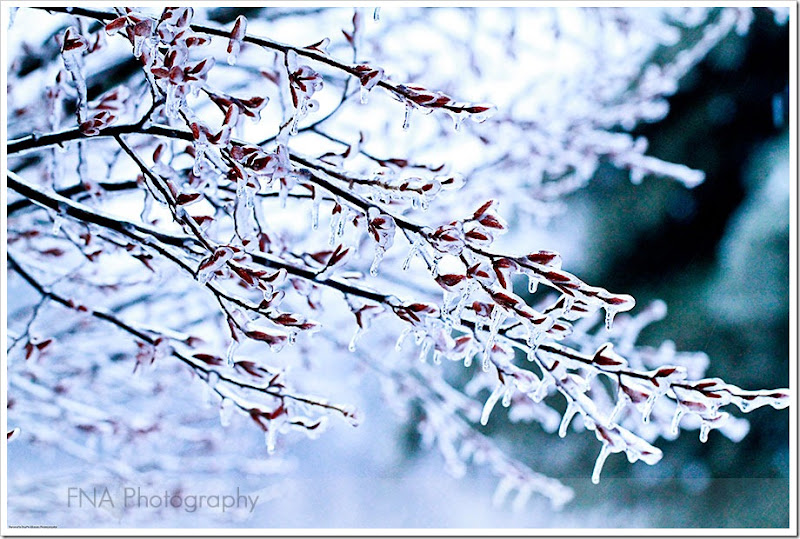 Feb-2-ice-28