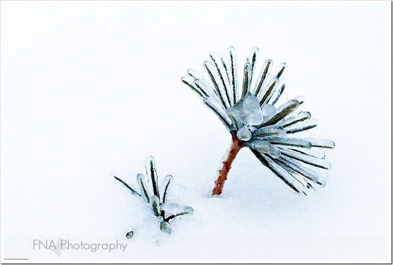 Feb-2-ice-32